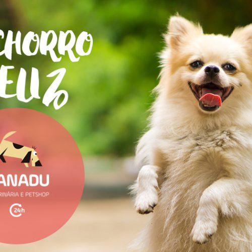 Cachorro feliz: 20 conselhos infalíveis