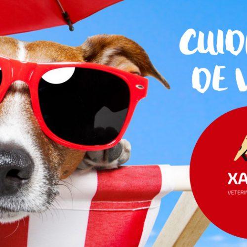 Cuidados especiais com cães e gatos no verão