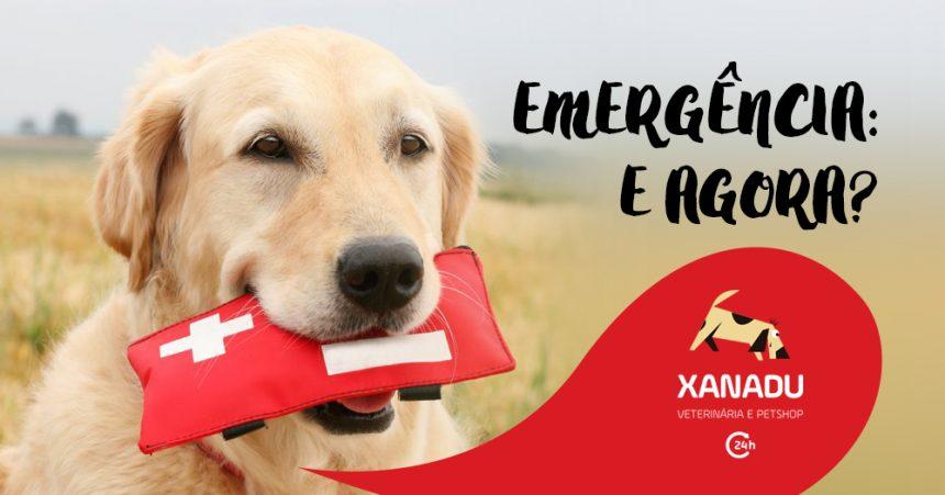 Emergência Pet: você está preparado?