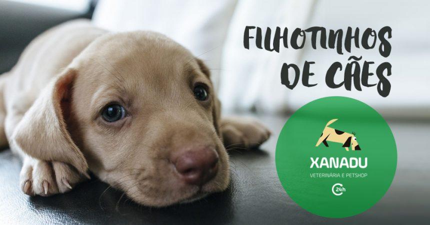 Doenças mais comuns em filhotes de cães