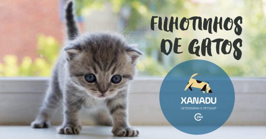 Doenças mais comuns em filhotes de gatos