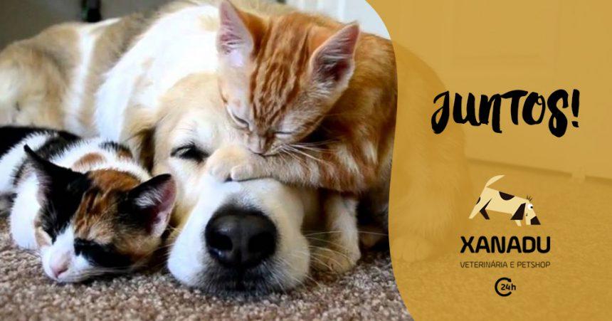 Como acostumar o gato e o cachorro a ficarem juntos