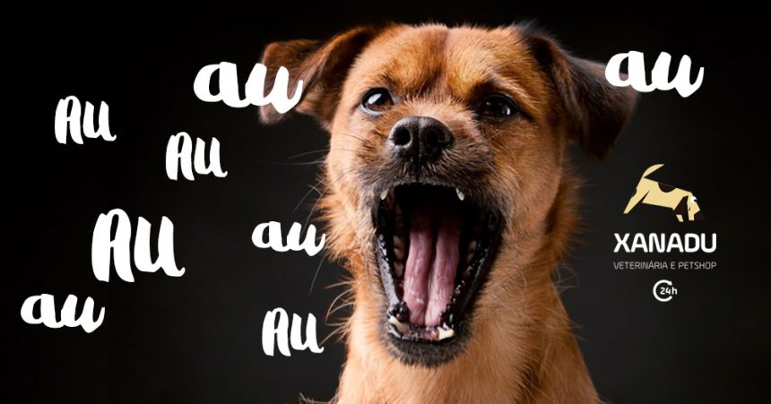 Cachorro que late demais – como educar
