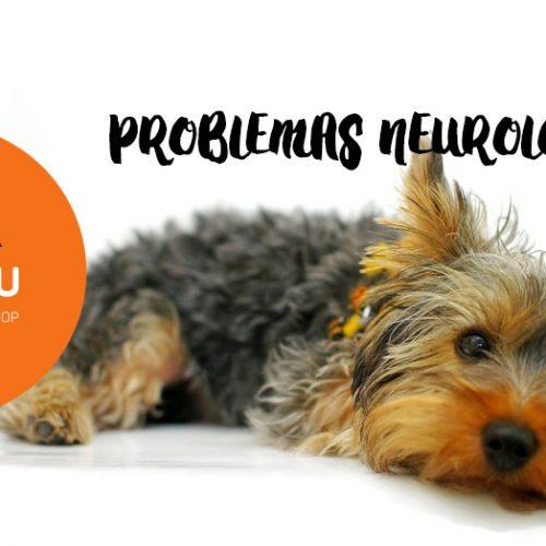 Problemas Neurológicos: podem aparecer em função de infecções ou causa genética