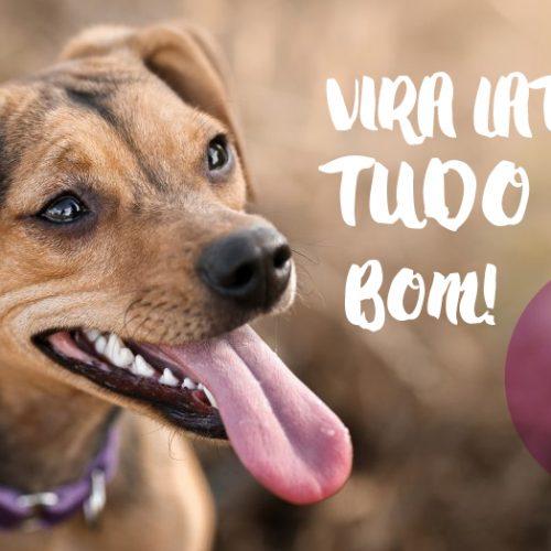 5 curiosidades sobre cachorro vira-lata que você precisa saber
