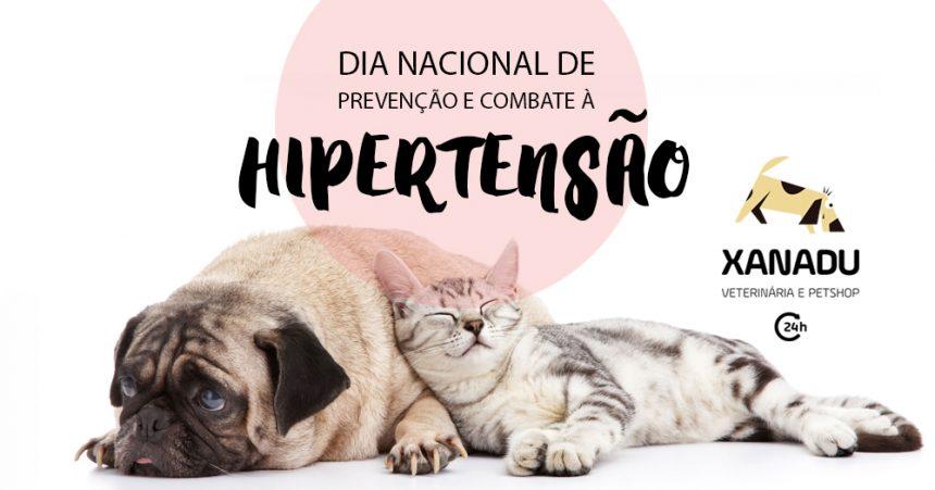 HIPERTENSÃO: cães e gatos podem ser assintomáticos