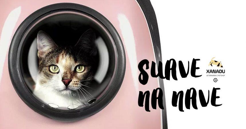 Consulta sem stress: o gato e a caixa de transporte