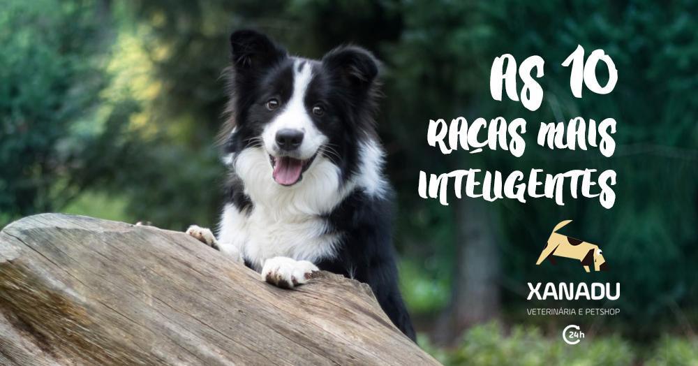 Cães As 10 Raças Mais Inteligentes Do Mundo E Outros Muito