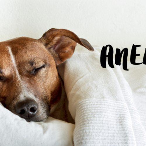 Anemia: Causas, sintomas e tratamentos
