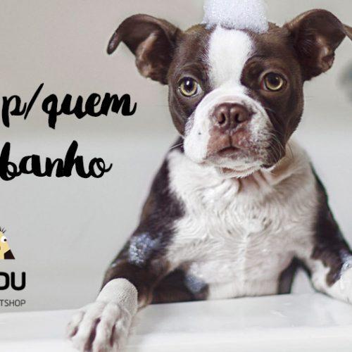 Dicas para cães que ODEIAM banho