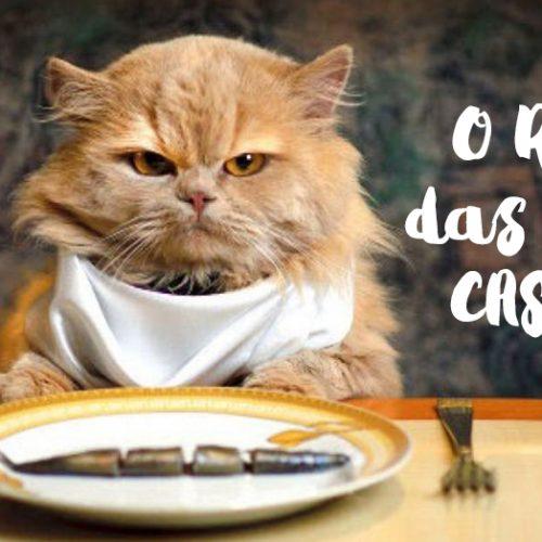 Dietas caseiras podem colocar a saúde dos gatos em risco, diz estudo
