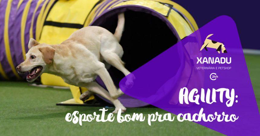 Agility: esporte bom pra cachorro