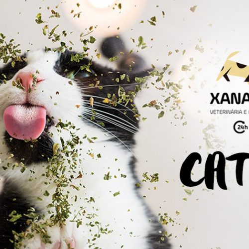 Catnip: a erva do gato