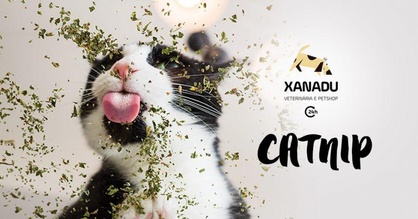 Catnip: a erva do gato