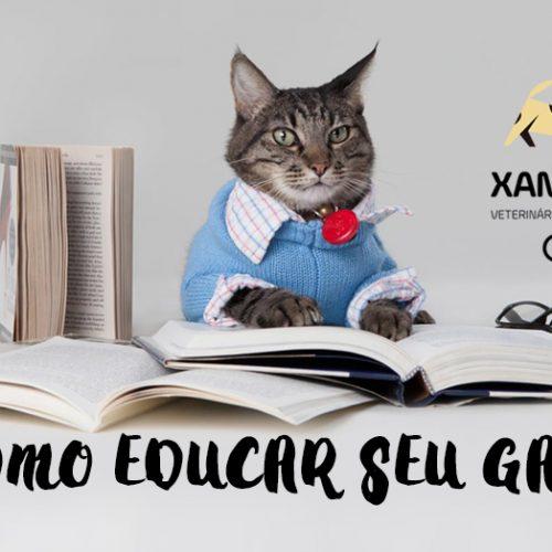 Erros comuns na educação dos Gatos