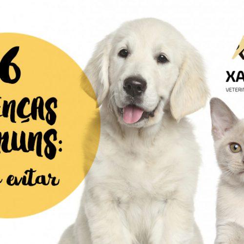 6 doenças comuns em cães e gatos: como evitar