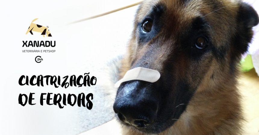 Cicatrização de feridas em cães e gatos