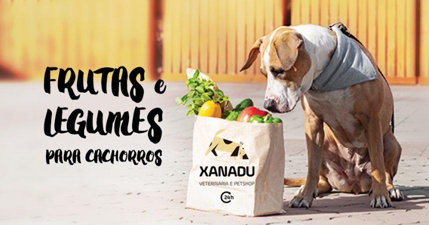 As melhores frutas e legumes para cachorros