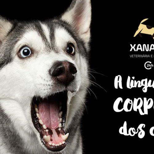 A Linguagem Corporal dos Cães
