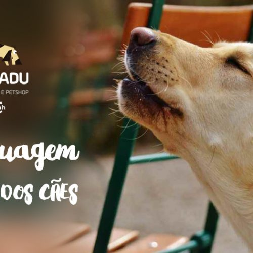 A Linguagem sonora dos cães