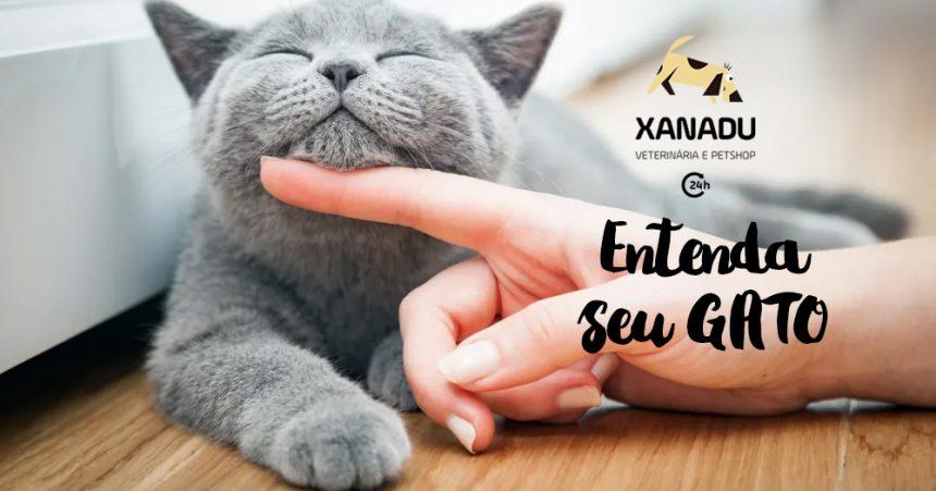 Entendendo melhor o comportamento dos gatos