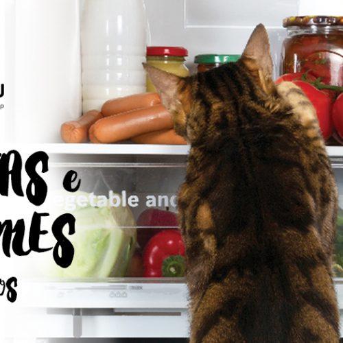 Frutas e legumes seguros para gatos