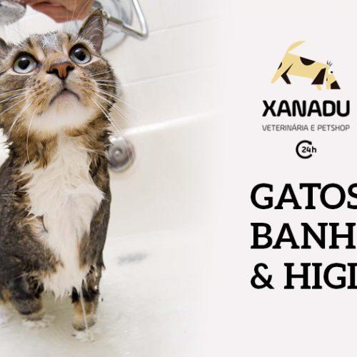 Gatos: banhos & higiene