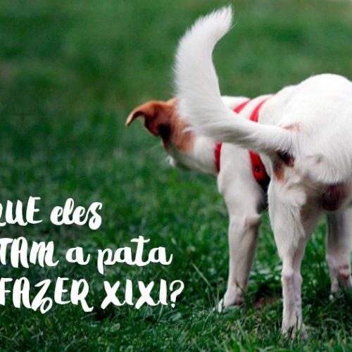 Por que os cachorros levantam a pata para fazer xixi?