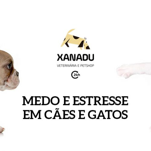 Medo e estresse em cães e gatos