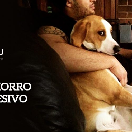 Cachorro possessivo