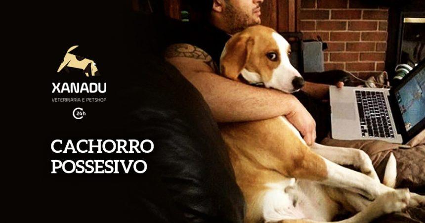 Cachorro possessivo