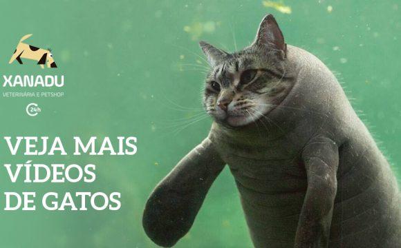 Assistir vídeos engraçados de gatos traz benefícios