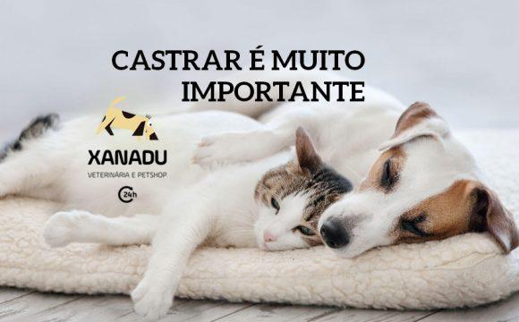 Por que é importante castrar cães e gatos