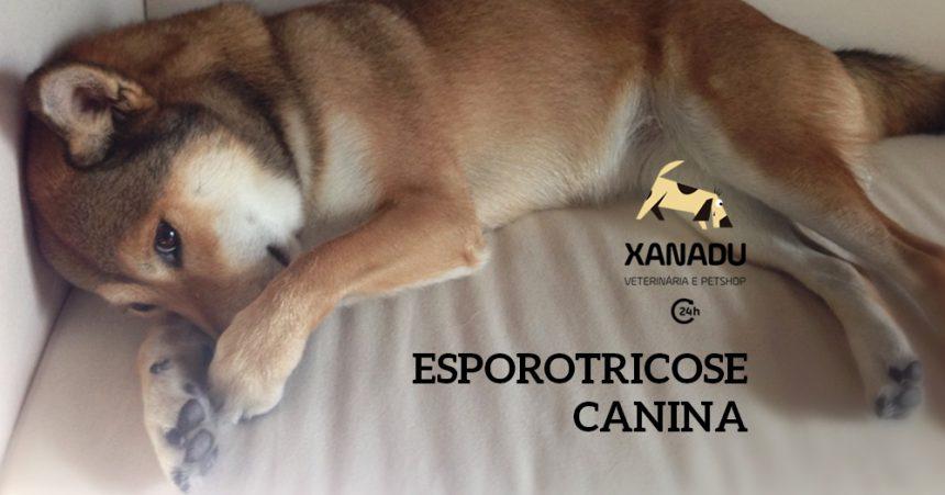Esporotricose Canina