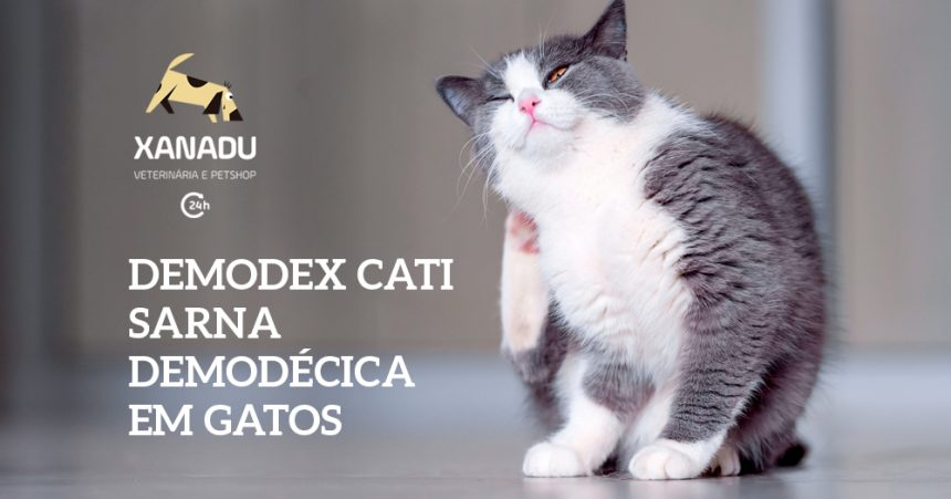 Demodex cati – Sarna Demodécica em gatos
