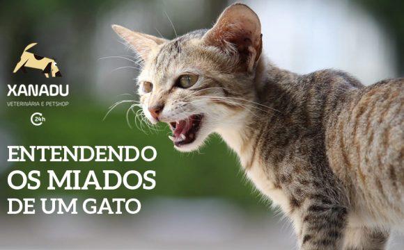 Entendendo o miado de seu gato