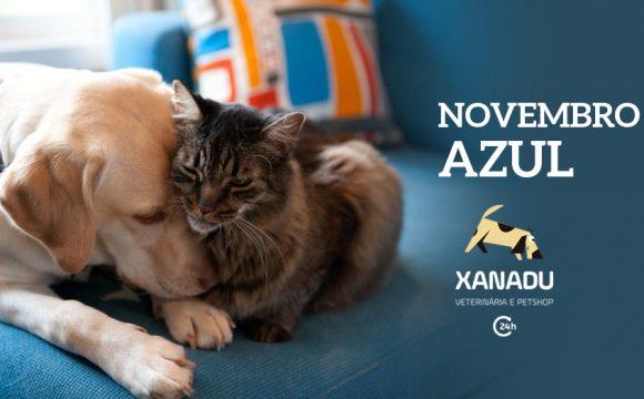 Novembro Azul PET: prevenindo o câncer de próstata em cães e gatos machos