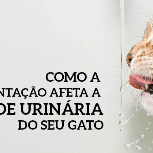 Como a alimentação afeta a saúde urinária do seu gato
