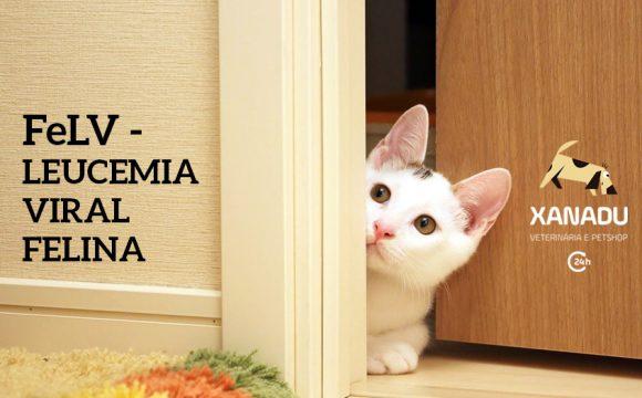 FELV – Leucemia Viral Felina