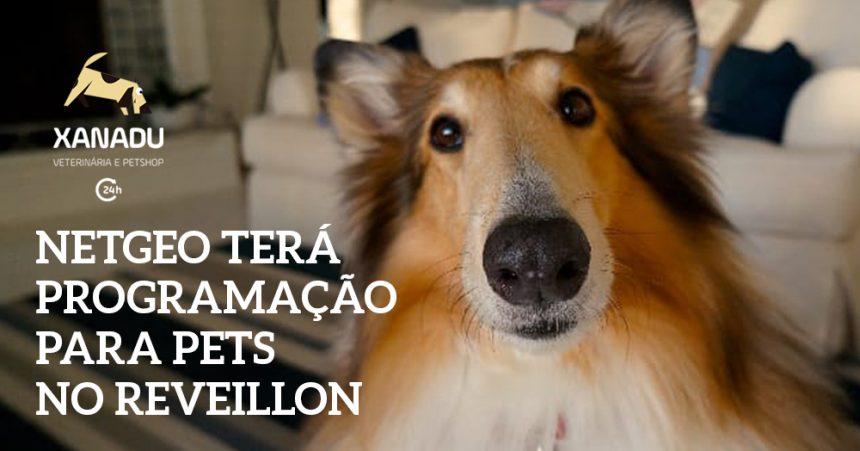 NetGeo terá programação especial para pets na noite de Reveillon