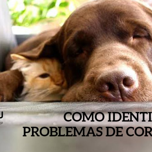 Sinais de doenças cardíacas em cães e gatos
