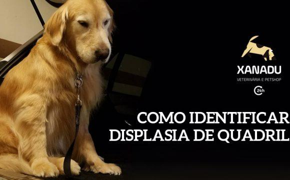 Displasia coxofemoral em cães