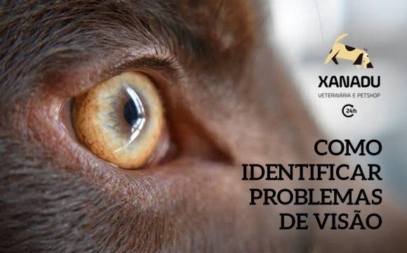 Como saber se o seu cão tem problemas de visão