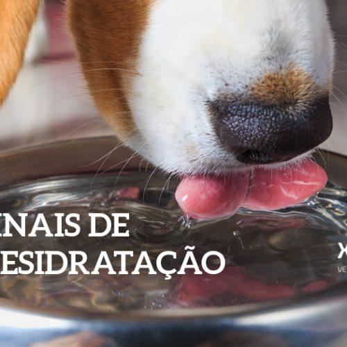 Sinais de Desidratação em Cães