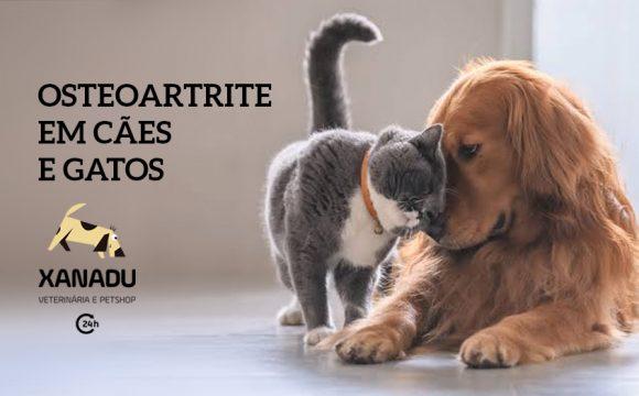 Osteoartrite em cães e gatos