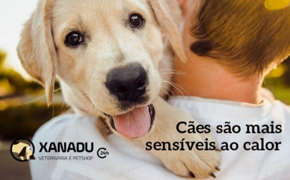 Cães são mais sensíveis ao calor